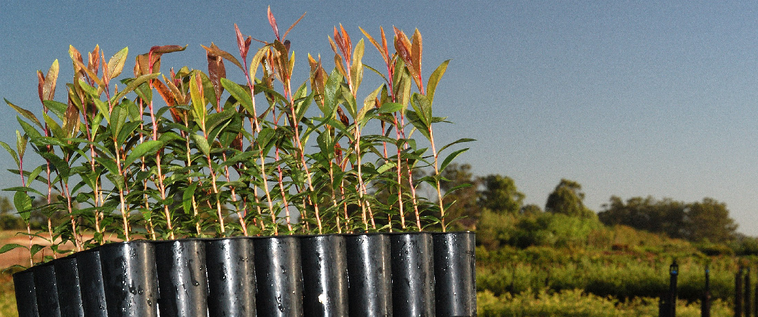 Wholesale Nursery Tubestock