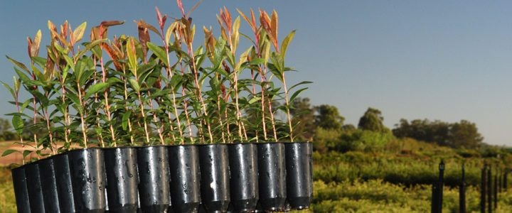 Wholesale Tubestock Nursery