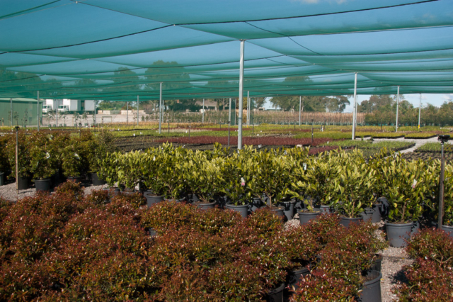 Wholesale plants sydney
