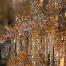 Frost Protection with irrigation |Freeze Plants to Keep Them Warm