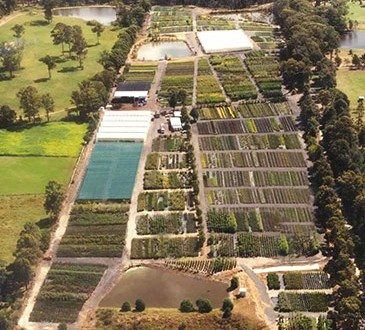 Downes Wholesale Nursery Sydney Aerial View