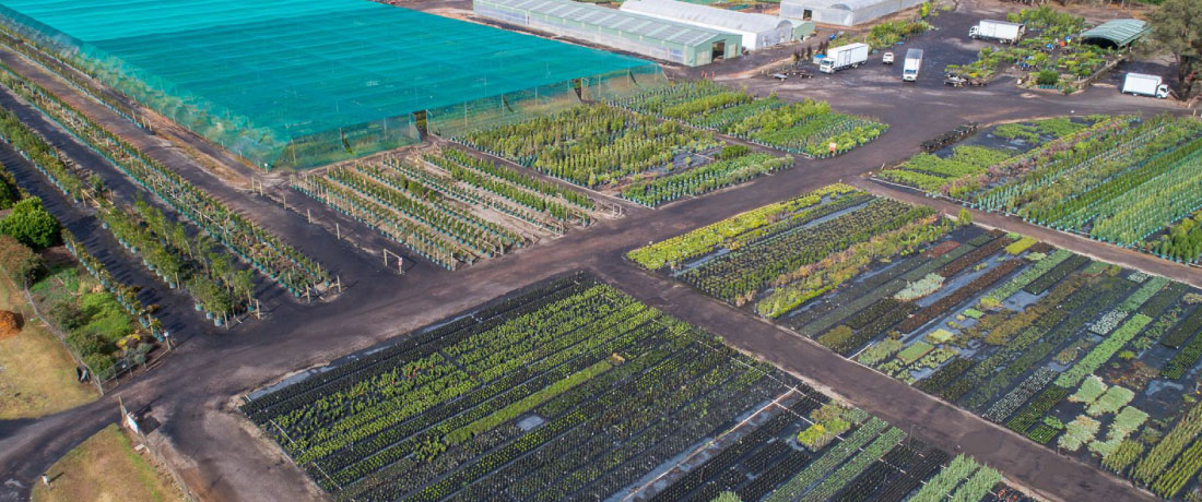 Downes Wholesale Nursery Drone View