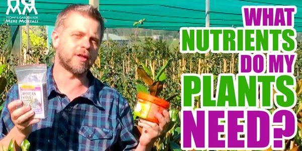 NPK fertiliser for plants