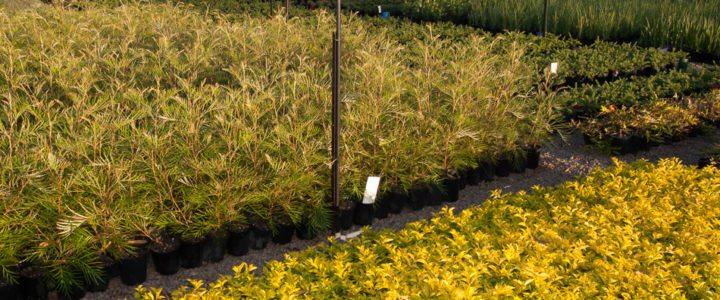 Plants Downes Nursery Sydney
